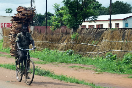 Wood transport with bycicle in Malawi