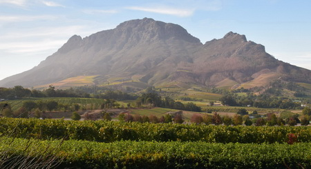 South African wine estates a paradise to discover